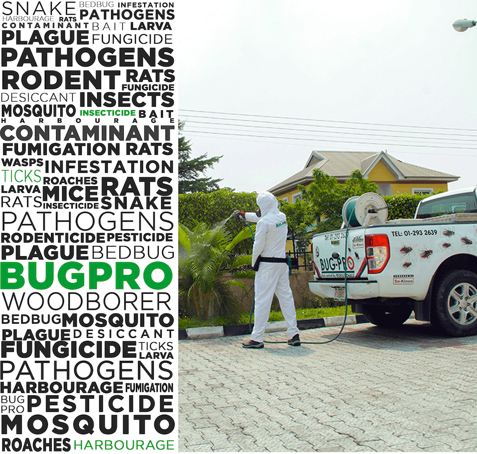 Bug Pro Ltd Pest Control And Fumigation Firm In Lagos Nigeria